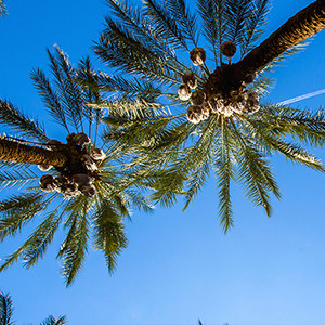 Thaw Out in Palm Springs